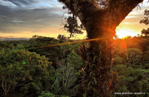 Планкен тропические породы